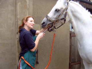 Handler rasps horse's teeth, while brace holds horse's mouth open: image via hedgroup.com