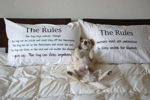 The Rules: Pillow cases for dog lovers: image via amazon.com