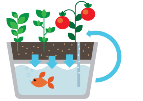 Aquaponics Technique