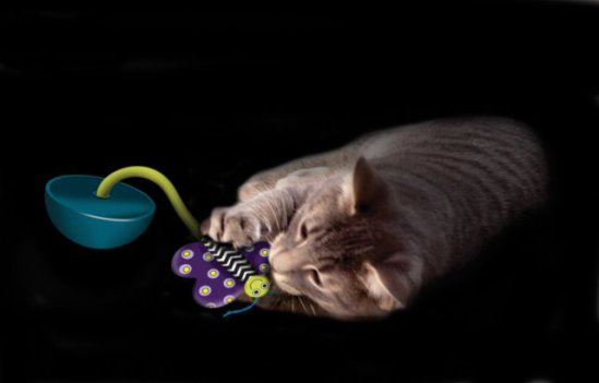 Cat plays with Petstages Quiet Glow Moth Nighttime Toy