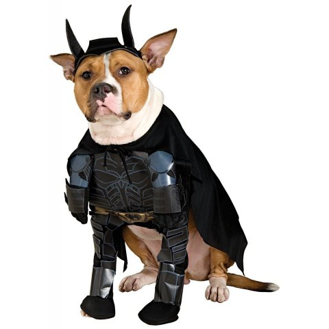 Batman The Dark Knight Dog Costume
