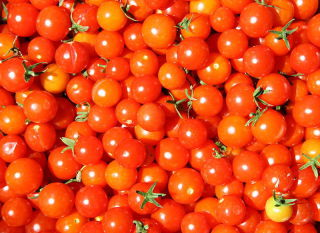 Safer tomatoes?: A new technique uses electrically charged water to eliminate pathogens from produce. Image by Pluma.