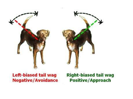 What Dog Wags Mean: image via psychologytoday.com