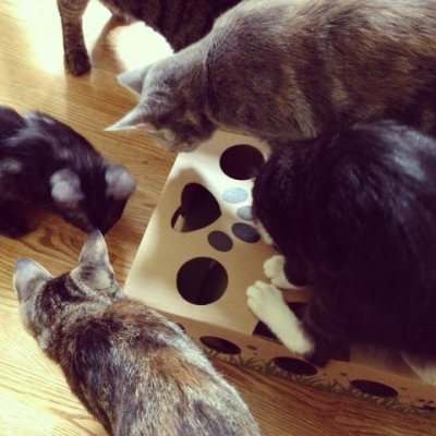 Cats can play Cat Amazing together or alone