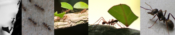 The anatomy and mentality of ants: © Brian Lee
