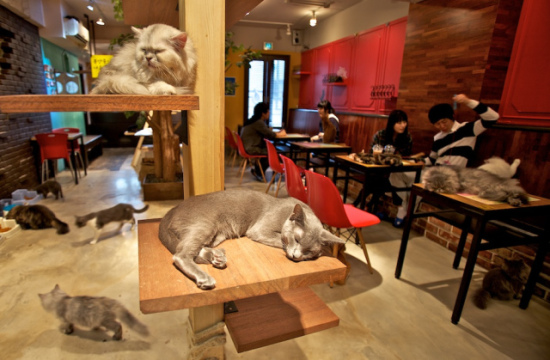 A cat cafe in Japan: image: Michael Meinhardt, Flickr via blog.sureflap.com