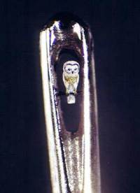 Owl Inside Eye of Needle