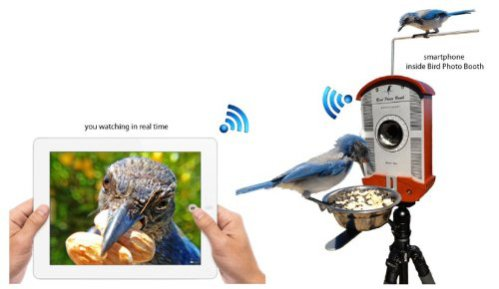 Bird Photo Booth: You control your camera shutter remotely