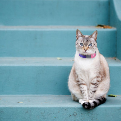 You should also Tagg track your cats: ©2011 Snaptracs, Inc., a Qualcomm company