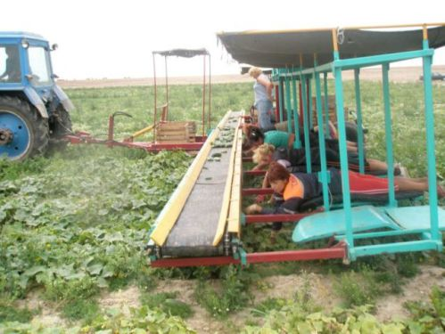 Cucumber Picker: Source: EnglishRussia