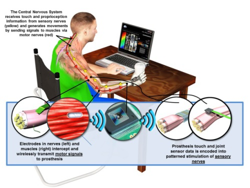 DARPA's Hand Proprioception and Touch Interfaces (HAPTIX) program aims to develop fully implantable, modular and reconfigurable neural-interface systems that would enable intuitive, dexterous control of advanced upper-limb prosthetic devices.