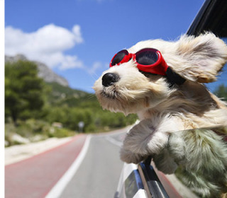 Doggles are my all-time favorite invention for dogs!