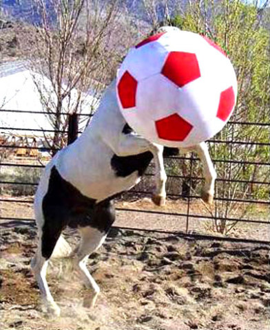 Equi-Spirit Soccer Ball