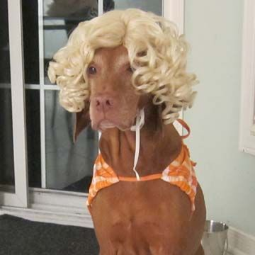Beach Girl DIY Halloween Dog Costume by Doggie Stylish: image via instructables.com