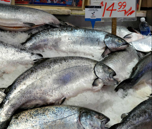 FDA Approves Genetically Modified Salmon for U.S. Consumption: No labeling will be required to identify it as such