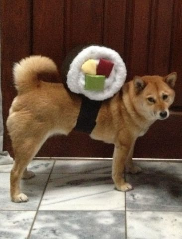 Sushi Roll Dog Costume by Tabbykittie: image via instructables.com
