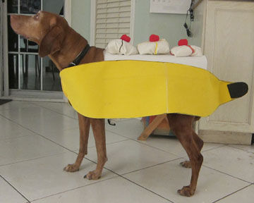 Banana Split DIY Dog Halloween Costume by Doggie Stylish