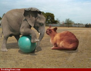 Fat cat takes on baby elephant: photoshopped image by missy via freakingnews.com