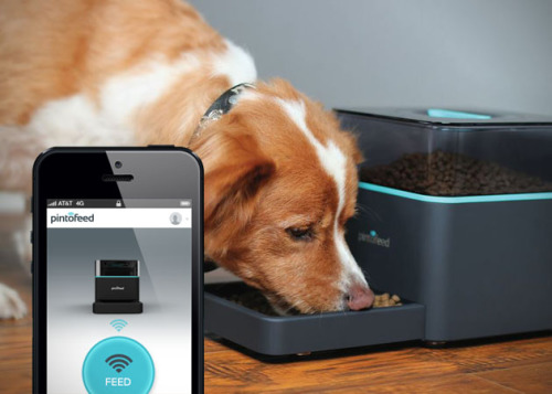 Pintofeed, The Intelligent Pet Feeder: image via indiegogo.com