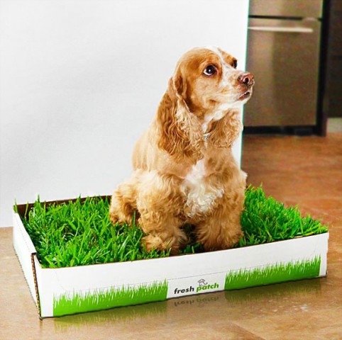 Fresh Patch Disposable Dog Toilet