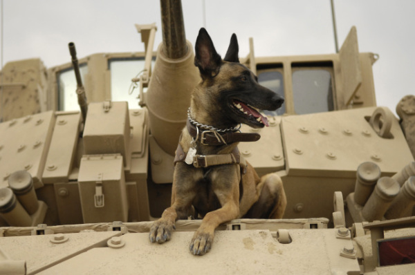 Attack Dog: Source: Wikipedia