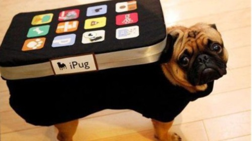 The iPug Doggie Costume