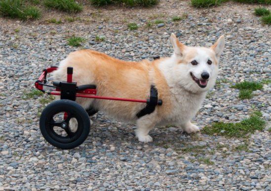 K9 Cart (rear) Dog Wheelchair