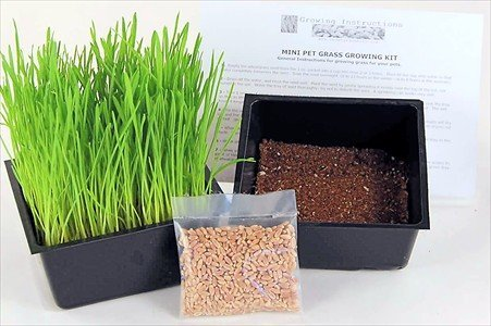 Mini Organic Wheatgrass Kit