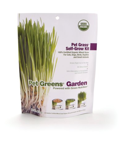 Pet Greens Garden Wheat Grass Kit