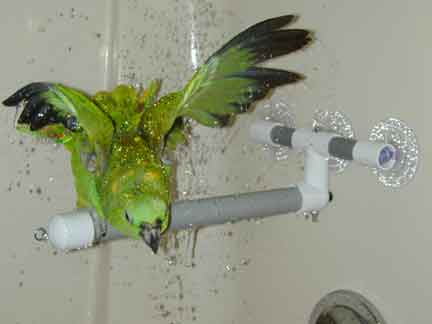 Polly's Pet Deluxe Shower Perch