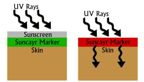 The Suncayr marker is GREEN when your sunscreen is protecting you from dangerous UV rays. The Suncayr marker is RED when you are no longer protected from UV. The colour change lets you know to re-apply your sunscreen.