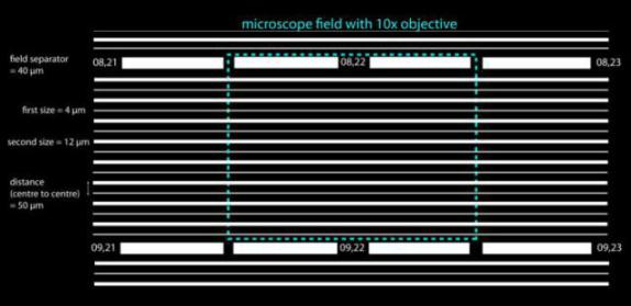 Actual running tracks: microscope field w/ 10x objective: image via worldcellrace.com