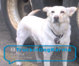 @TruckinDogKarma