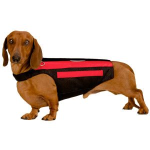 Wiggleless® Dog Back Brace: Photo: Wiggleless.com