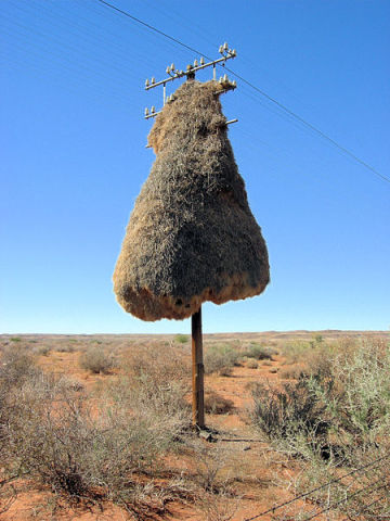 Weaver Bird's Nest (Photo by Sara&Joachim/Creative Commons via Wikimedia)
