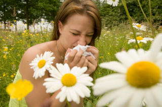 You may be uncomfortable, but your allergies are protecting your brain: image via all-allergies.com