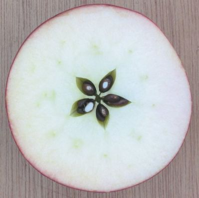 Picture of an ordinary apple.