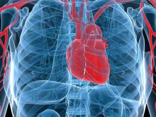 A new marker for heart disease...: image via earthtimes.org