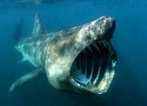 "The Basking Shark Inspired Anthony Reale's ""Strait Power"" Water Turbine: Image via: oursurprisingworld.com"