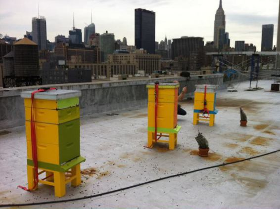 Manhattan Rooftop Beehives (Image via New York City Beekeepers Association)
