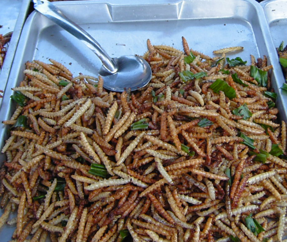 Deep Fried Bamboo Worms (Photo by Takoradee/Creative Commons via Wikimedia)