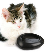 Ciottoli small pet bowl.: © IMAC