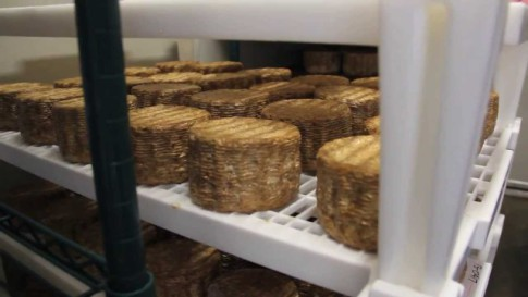 Cheese Made With Human Bacteria (You Tube Image)