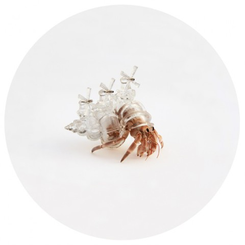 3D Printed Shell for Hermit Crabs (Image via Aki Inomata)