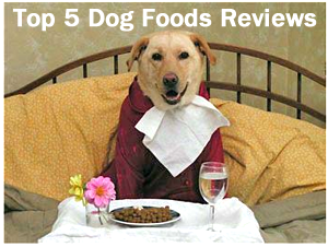 The Top 5 Dog Food Reviews