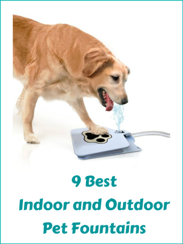 9 Best Indoor And Outdoor Pet Fountains For Your Dogs and Cats