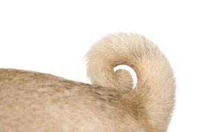 What is your dog saying with his tail?: image via dogtalk101.blogspot.com