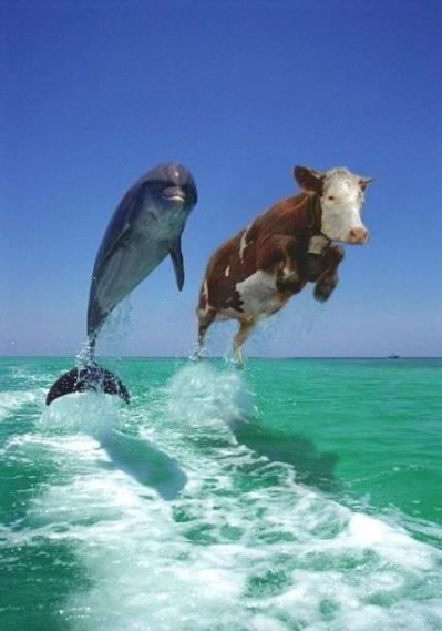 dolphin%20and%20cow.img_assist_custom.jp
