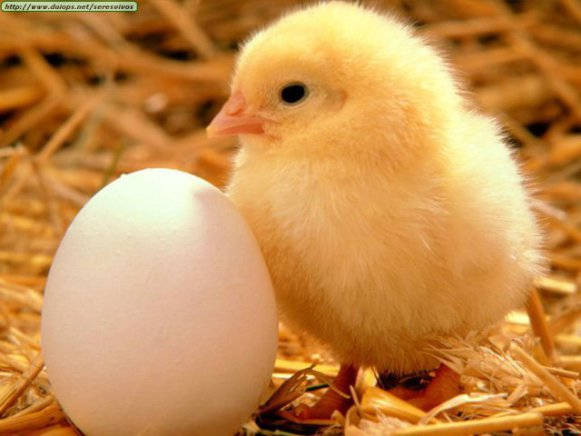 Chick and Egg (Photo by Juegos olimpicos 2012/Creative Commons via Wikimedia)