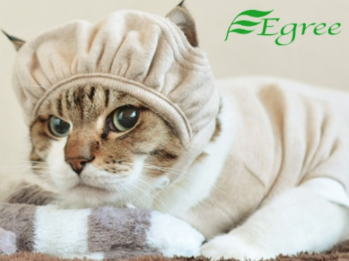 Egree protective Cat Hat: image via japantrendshop.com